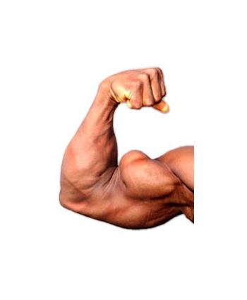 Exercices de musculation des biceps